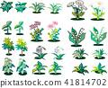 หญ้า,ดอกไม้,ไม้ 41814702