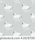 white swan with reflection seamless background 41828700