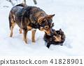 cat, dog, animal 41828901