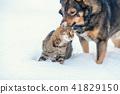 cat, dog, animal 41829150