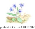 Violet 41833202