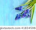 flowers flower blossom 41834506
