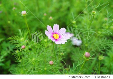 꽃 41840824