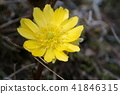 ดอกไม้,ฤดูใบไม้ผลิ,กลีบ 41846315
