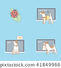 Vector - Pet's daily life, various companion animals vector illustration 012 41849966
