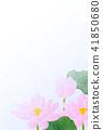 พื้นหลังไปรษณียบัตรของ Lotuses 41850680