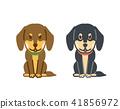 개, 강아지, 미니추어닥스훈트 41856972