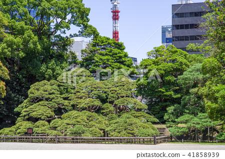 hamarikyu gardens, city, japanese black pine - Stock Photo [41858939 ...