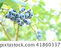 블루 베리 41860337