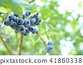 藍莓 漿果 莓 41860338