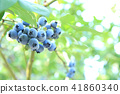 藍莓 漿果 莓 41860340