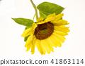 해바라기 꽃 41863114