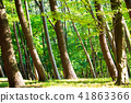 여름 소나무 숲 41863366