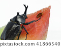 Beetles and watermelon (depth synthesis) 41866540