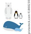 Maritimu, polar, bear 41868230