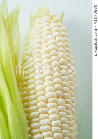 玉米(白玉米) 41870880