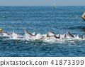 海 大海 海洋 41873399