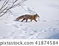 눈과 북극 여우 (홋카이도) 41874584