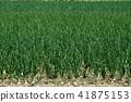 양파 밭 41875153