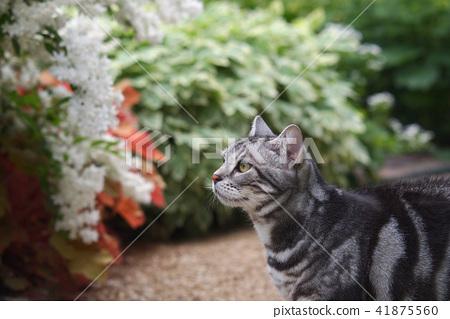 Cat in the garden upper body 41875560