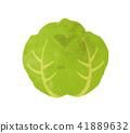 白菜的插圖 41889632