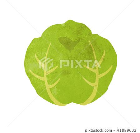 Cabbage illustration 41889632