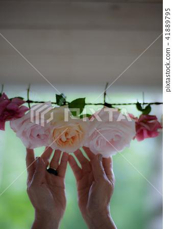 富良野Atelier Missyou的玫瑰 41889795