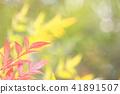 秋叶橙黄色绿色秋天颜色 41891507