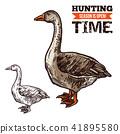 Goose wild bird sketch for hunting sport design 41895580