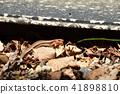 파충류, 고엽, 마른 잎 41898810