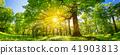 Tree foliage in morning light 41903813
