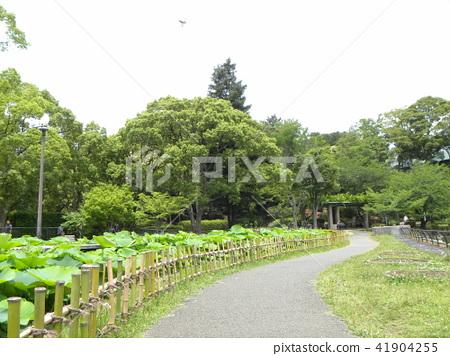 치바 공원 오오가하스 연못 산책로 41904255