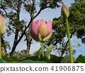 千葉公園的Ogajas是一朵粉紅色的花 41906875