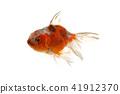 물고기, 생선, 금붕어 41912370