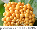 mushroom 41916997