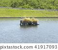 june, summer, pond 41917093