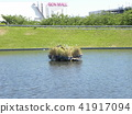 june, summer, pond 41917094