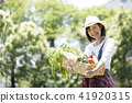 농업 야채 수확 41920315
