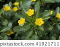 식물, 화초, 꽃 41921711