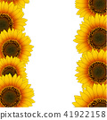 Orange Yellow Sunflower Border 41922158