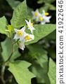 ดอกไม้,ไม้,โรงงาน 41922646
