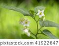 ดอกไม้,ไม้,โรงงาน 41922647