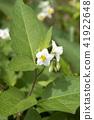 ดอกไม้,ไม้,โรงงาน 41922648