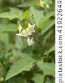 ดอกไม้,ไม้,โรงงาน 41922649