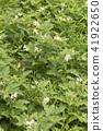 วัชพืช,ธรรมชาติ,หญ้า 41922650