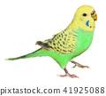 잉꼬 노란색과 연두색 일반 색상 41925088