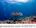 scuba diver and Manta in the blue ocean  41925671