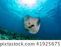 Manta in the blue ocean background portrait 41925675