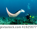 scuba diver and Manta in the blue ocean  41925677