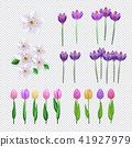 set, spring, flower 41927979